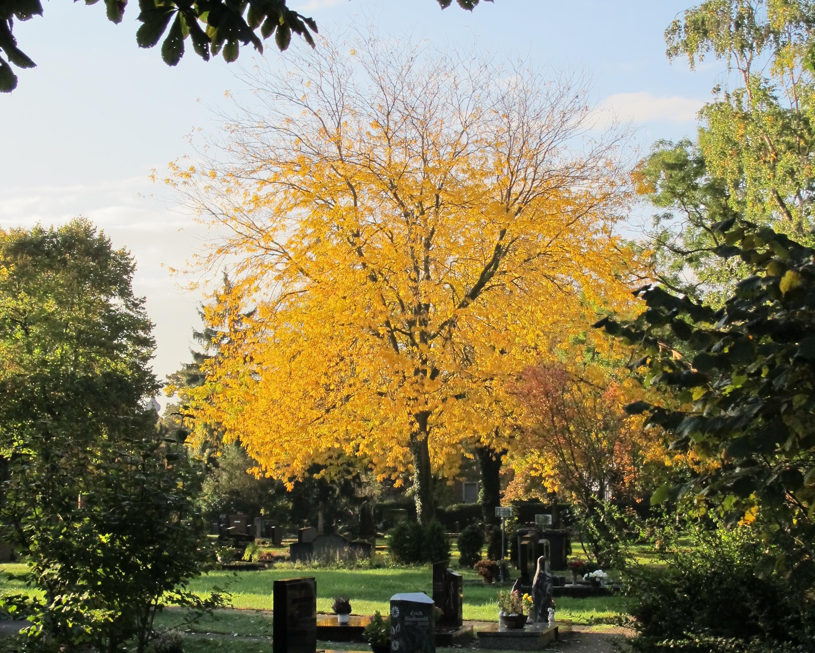 Großer Baum auf Friedhof